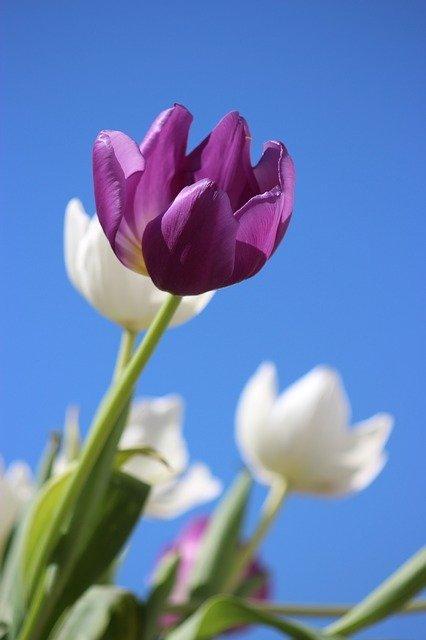 significado-de-las-flores