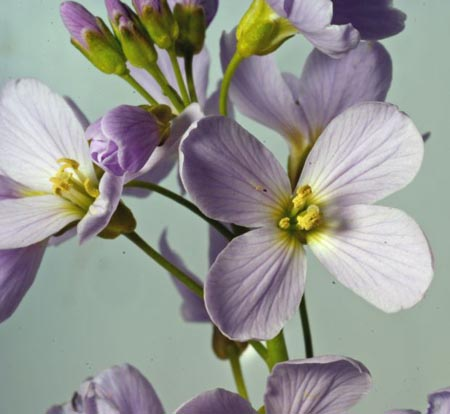 flores feng shui