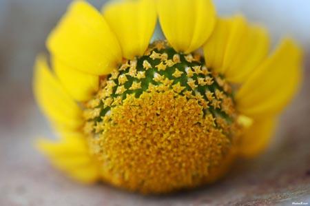 flores amarillas significado