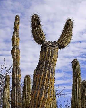 luna-de-miel-en-guaymas-mexico