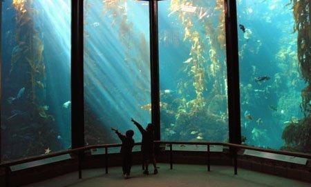 aquarium san francisco