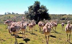 turismo-rural-en-uruguay-tres-opciones-para-este-otono