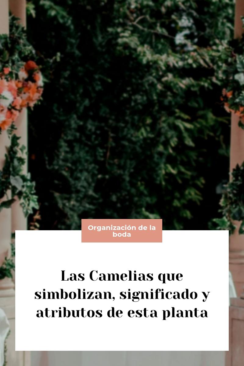 Las Camelias que simbolizan, significado y atributos de esta planta
