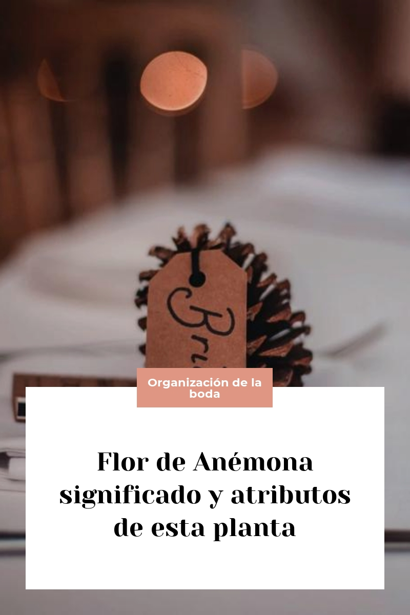 Flor de Anémona significado y atributos de esta planta