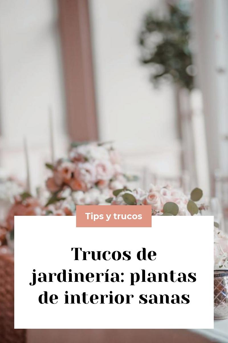 Trucos de jardinería: plantas de interior sanas