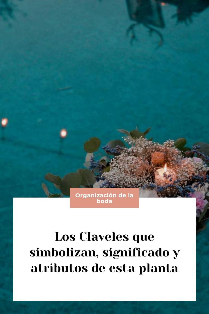 Los Claveles que simbolizan, significado y atributos de esta planta