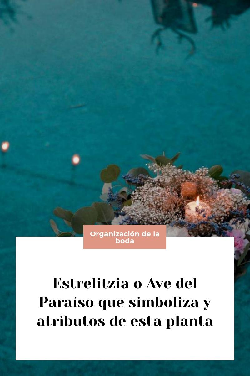 Estrelitzia o Ave del Paraíso que simboliza y atributos de esta planta